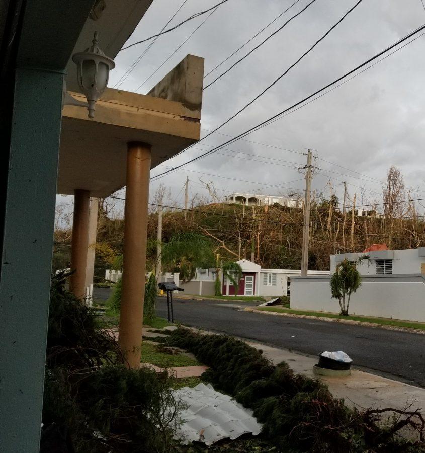 vegetación despúes del huracán