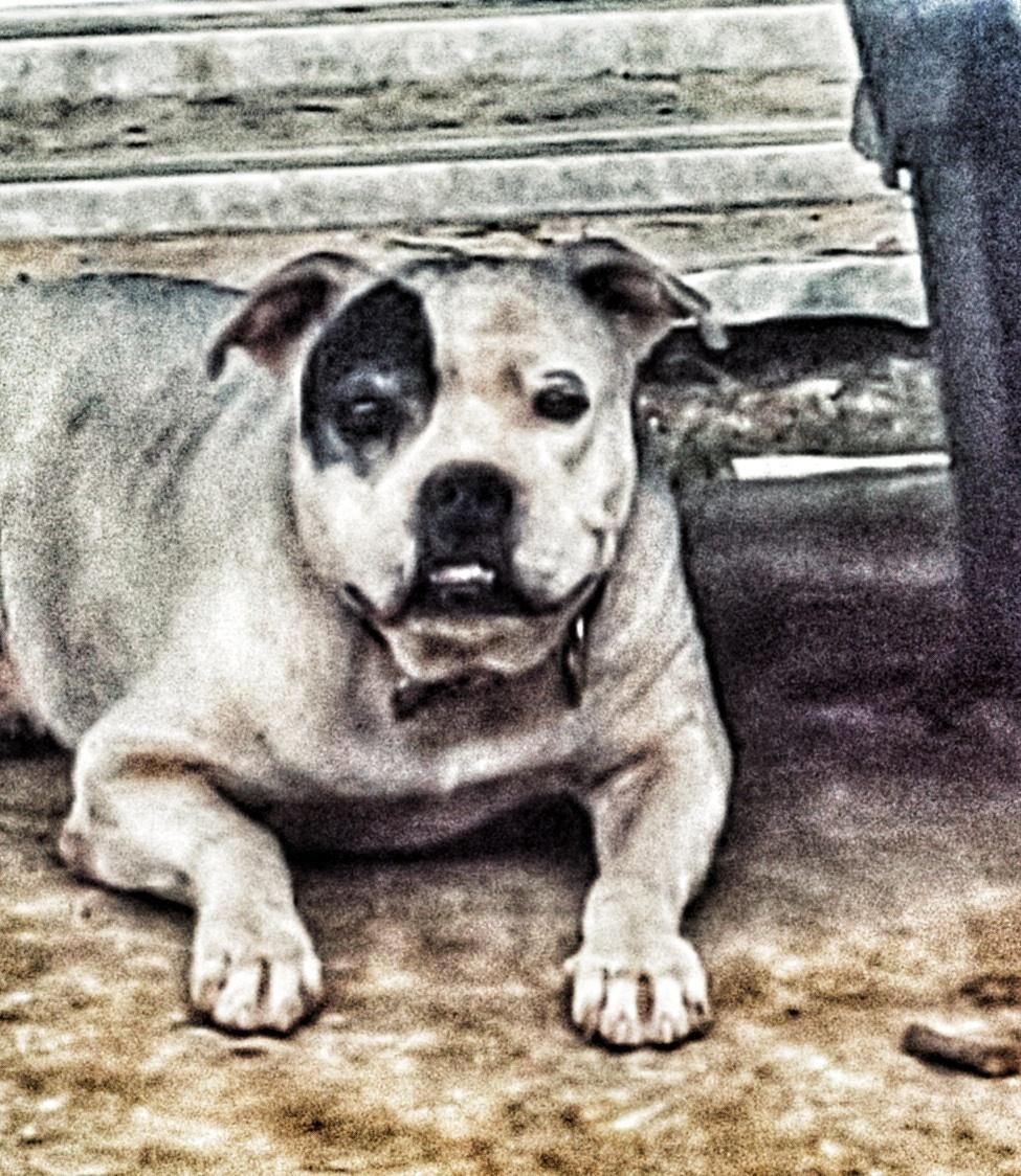 Max, el mejor amigo del hombre
